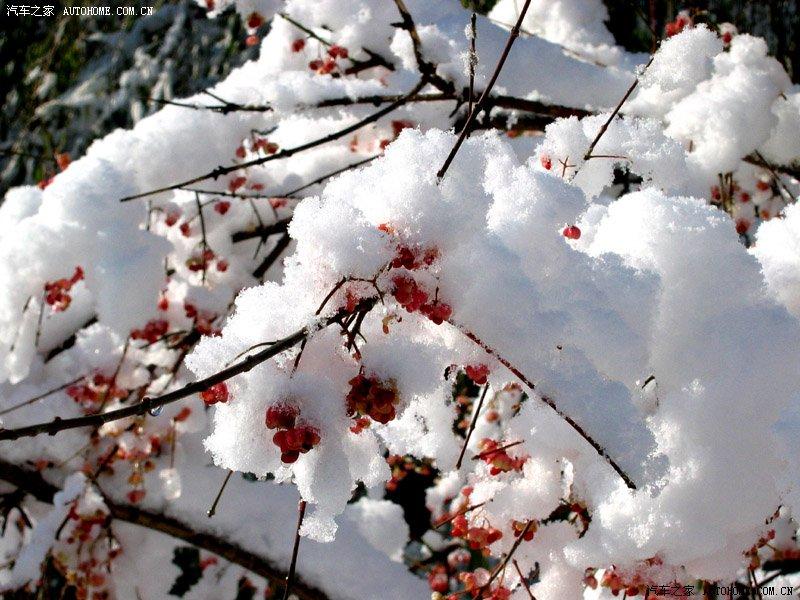 我是冬天一片雪 - 风语无言 - 风语无言的博客