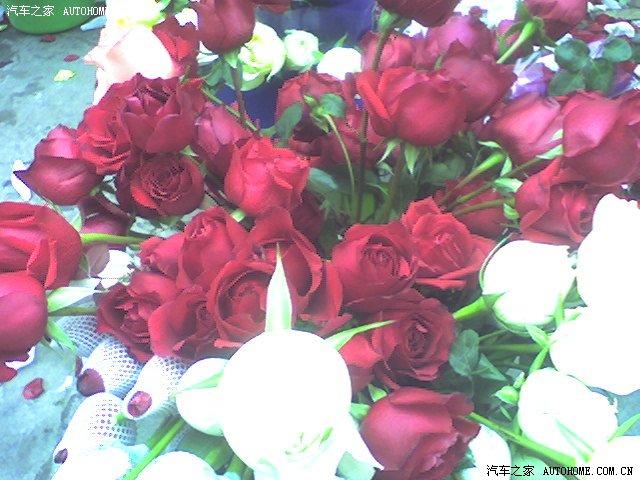 红色恋情蓝色妖姬 - 美丽心情 - 美丽心情