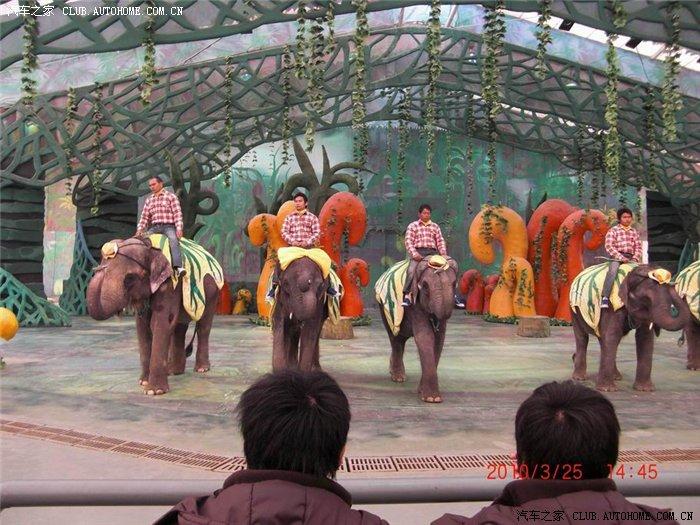 春天游常州恐龙园之大象表演及恐龙园纪念品